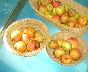 Äpfel14