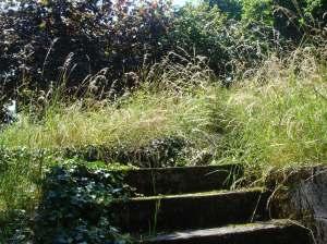 Garten5